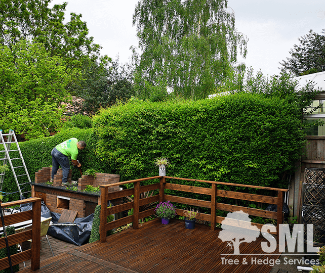 Hedge Trimming - SML - Tree & Hedge Services